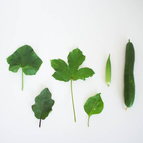 夏野菜の葉っぱ